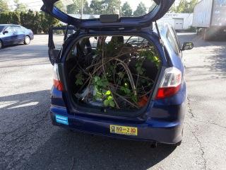 Car:Vines